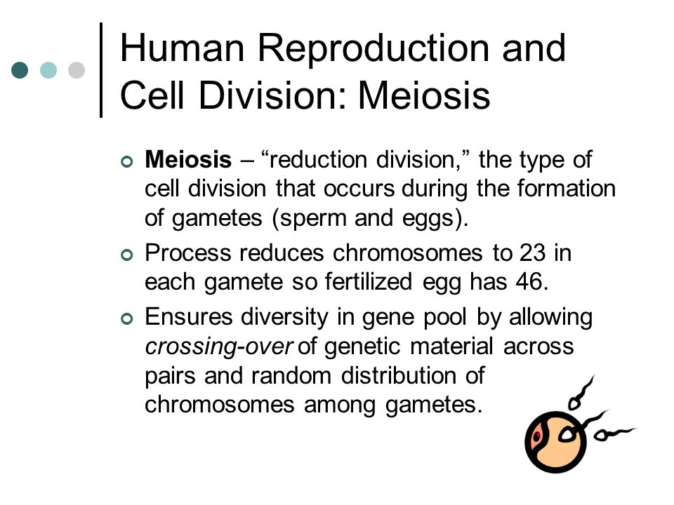 Human Reproduction and Cell Division: Meiosis