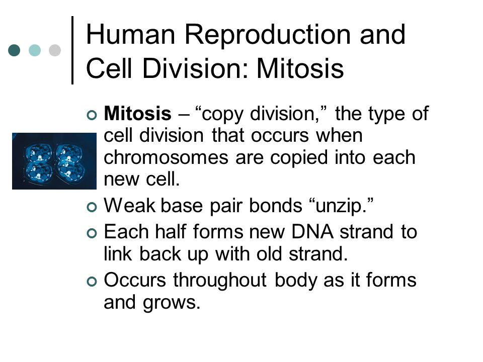 Human Reproduction and Cell Division: Mitosis