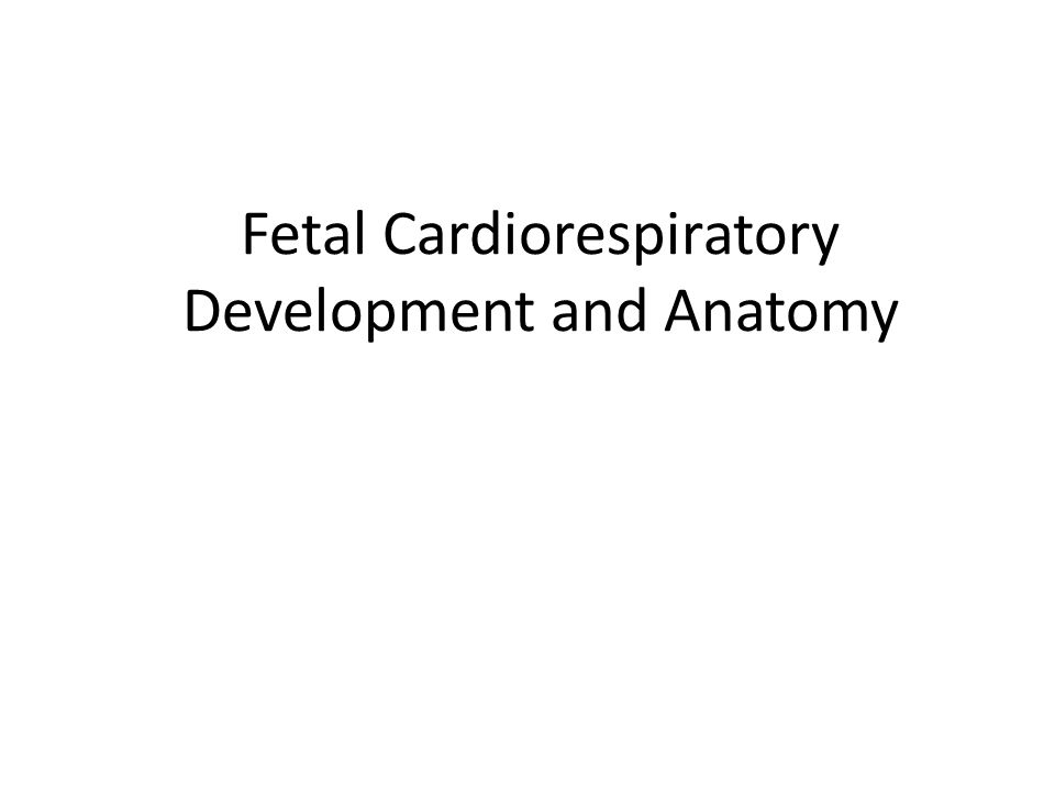 Fetal Cardiorespiratory Development and Anatomy