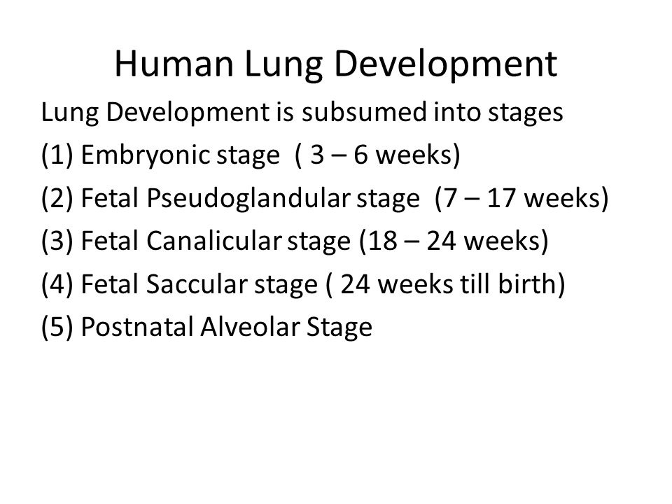 Human Lung Development