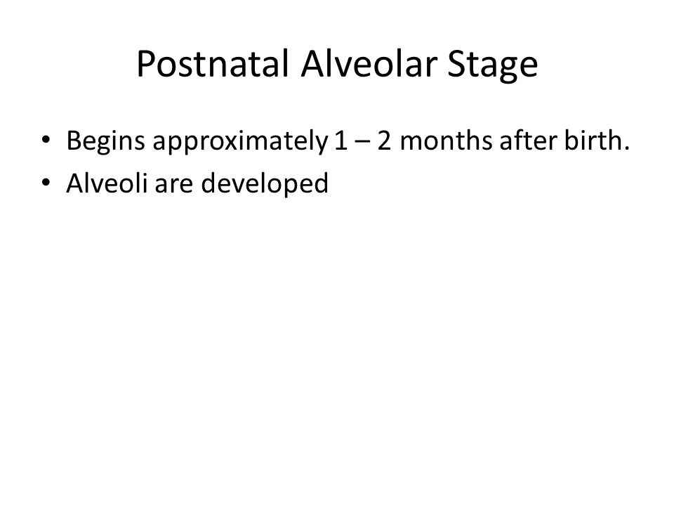 Postnatal Alveolar Stage