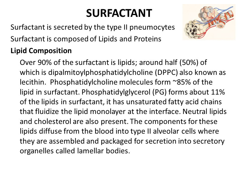 SURFACTANT Surfactant is secreted by the type II pneumocytes