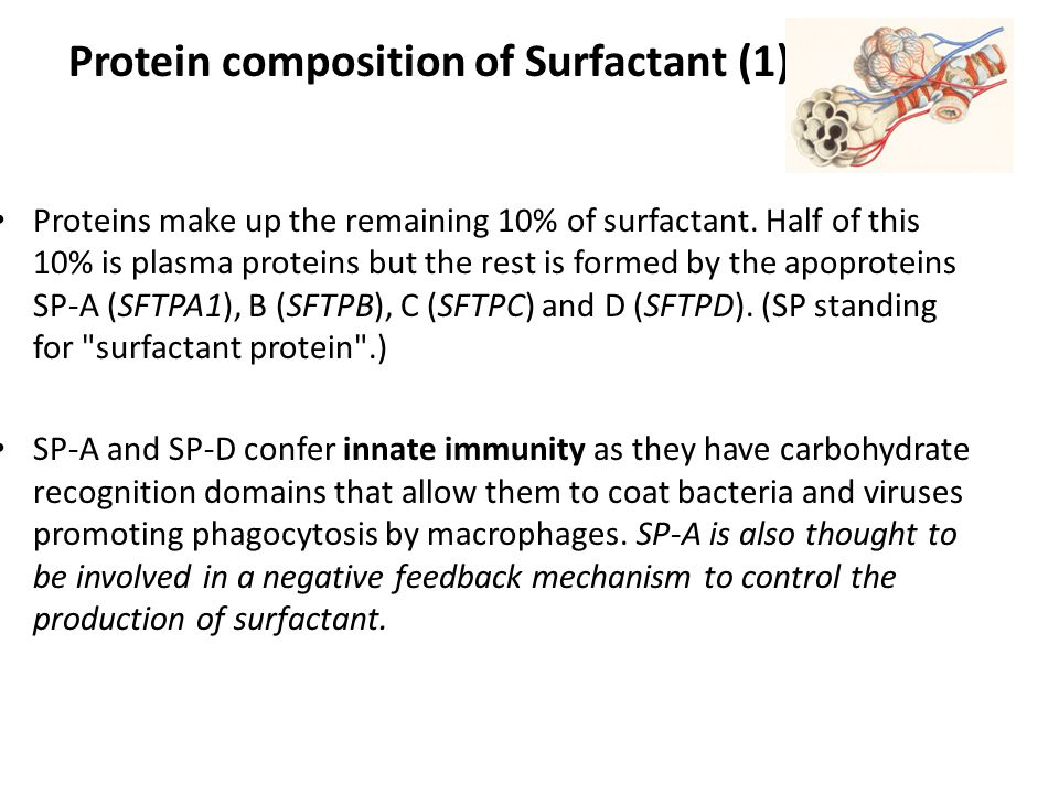 Protein composition of Surfactant (1)