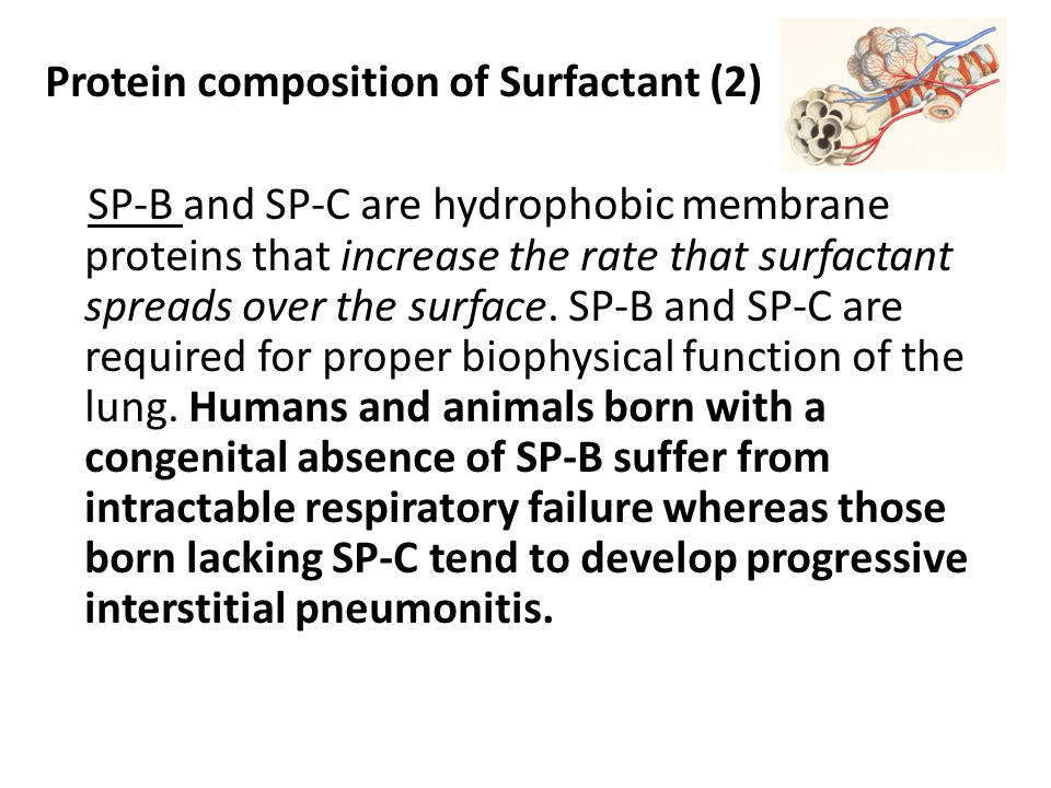 Protein composition of Surfactant (2)