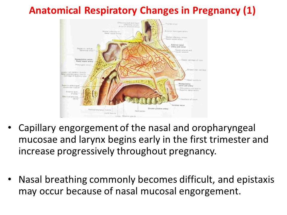 Anatomical Respiratory Changes in Pregnancy (1)