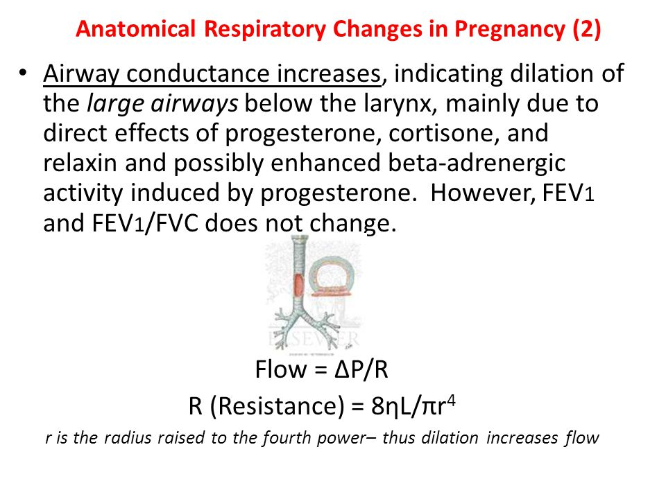 Anatomical Respiratory Changes in Pregnancy (2)