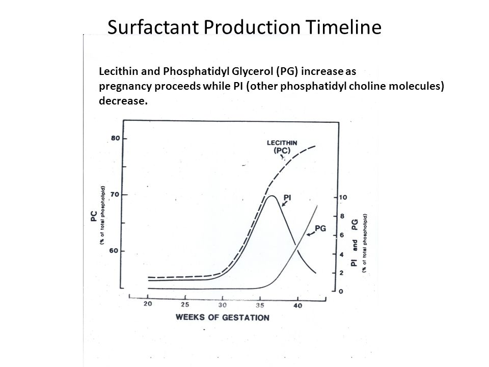 Surfactant Production Timeline