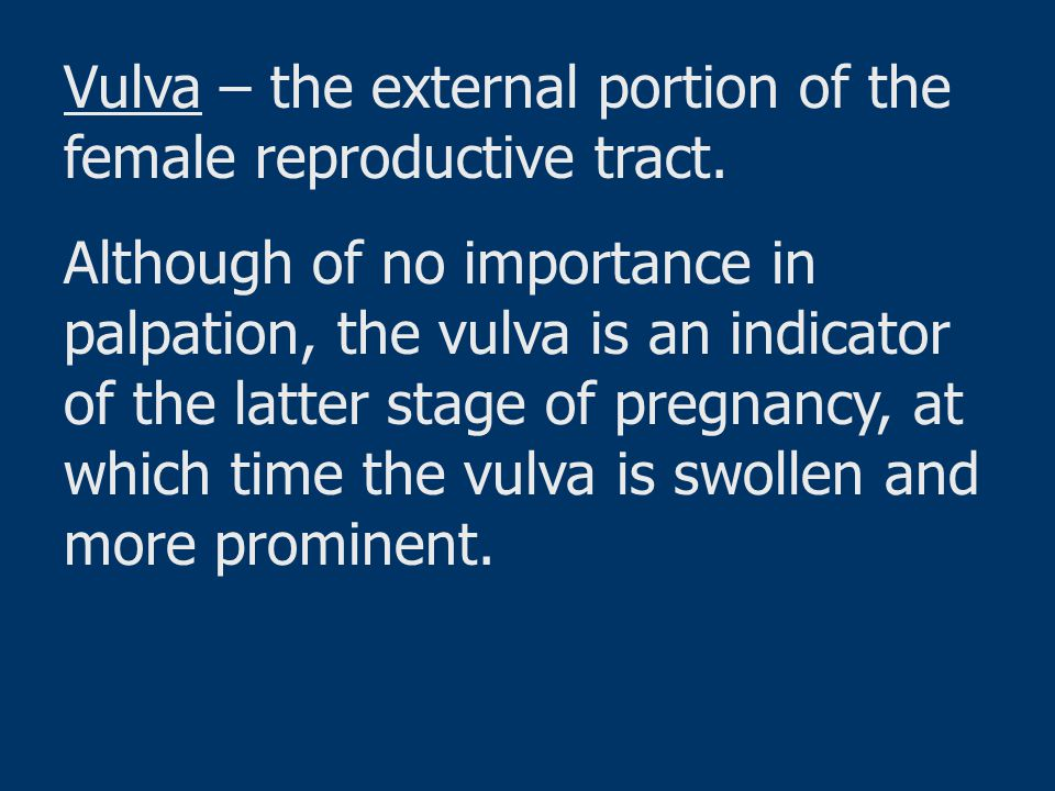 Vulva – the external portion of the female reproductive tract.