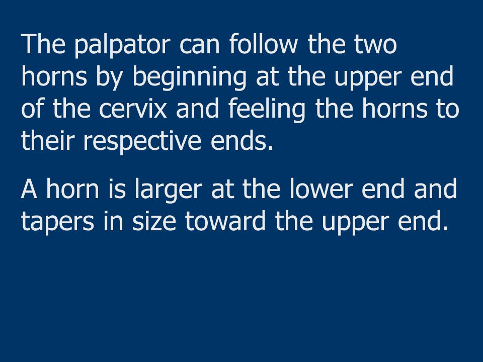 The palpator can follow the two horns by beginning at the upper end of the cervix and feeling the horns to their respective ends.