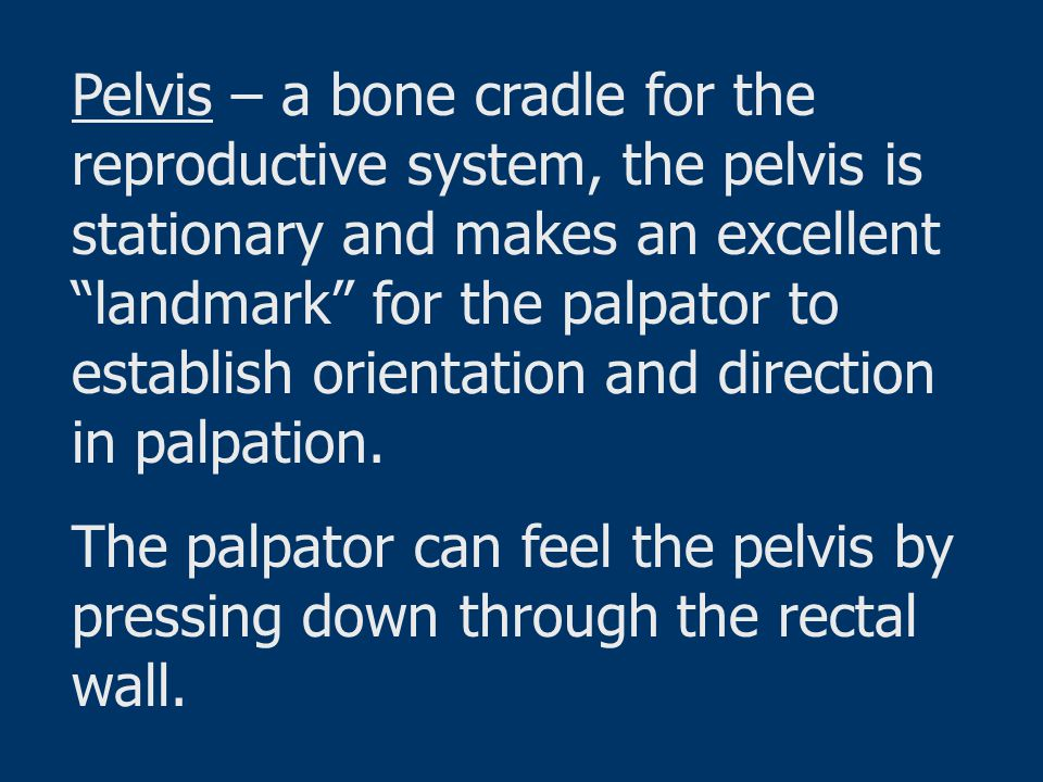 Pelvis – a bone cradle for the reproductive system, the pelvis is stationary and makes an excellent landmark for the palpator to establish orientation and direction in palpation.