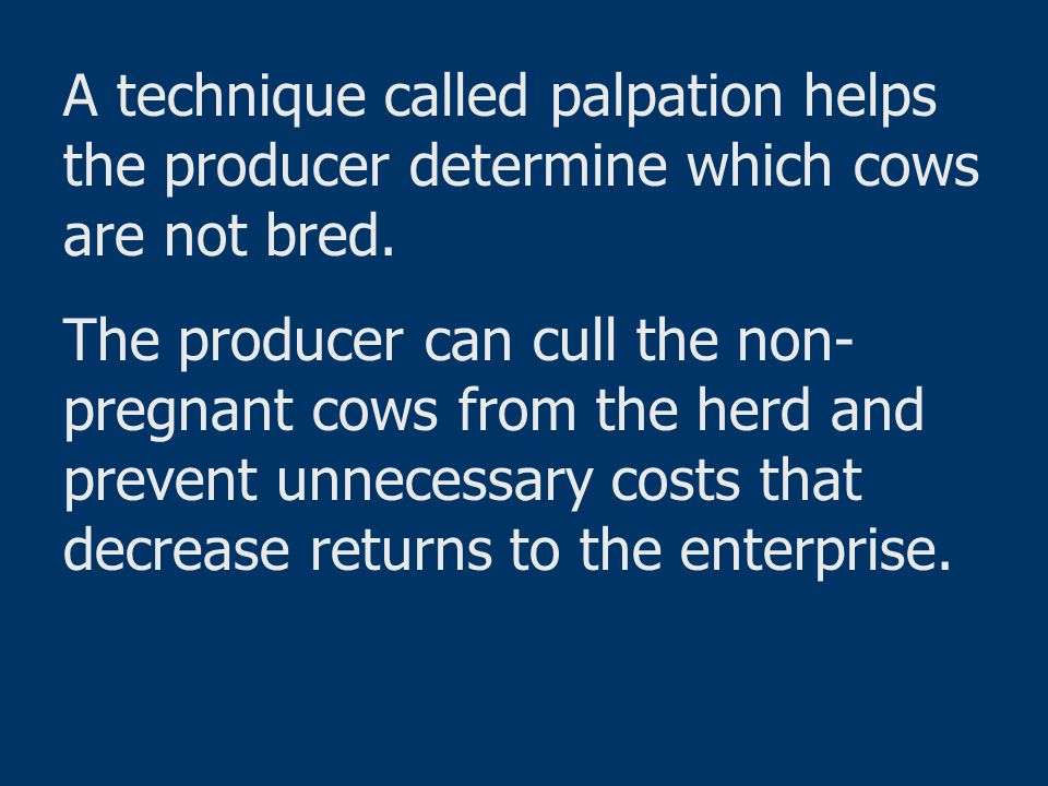 A technique called palpation helps the producer determine which cows are not bred.