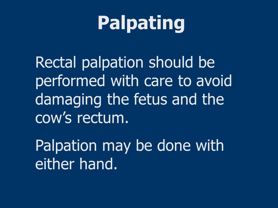 Palpating Rectal palpation should be performed with care to avoid damaging the fetus and the cow's rectum.