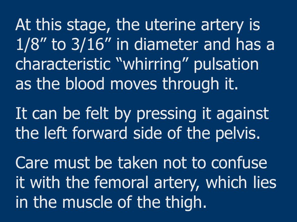 At this stage, the uterine artery is 1/8 to 3/16 in diameter and has a characteristic whirring pulsation as the blood moves through it.