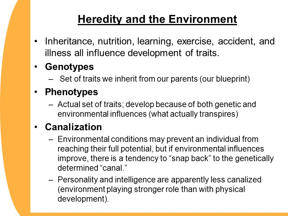 heredity and environment on the development of personality Studying how genes and our surroundings may or may not form the personalities, behaviors, and psychopathologies of human beings is probably the most obvious way to approach the argument of.