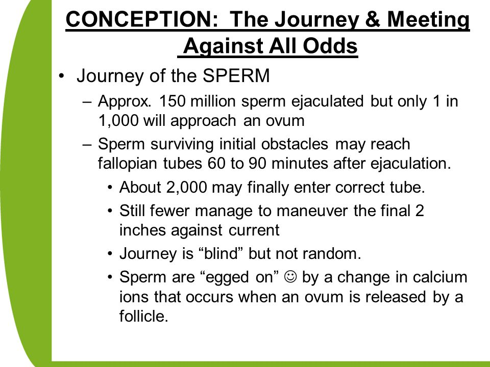 CONCEPTION: The Journey & Meeting Against All Odds