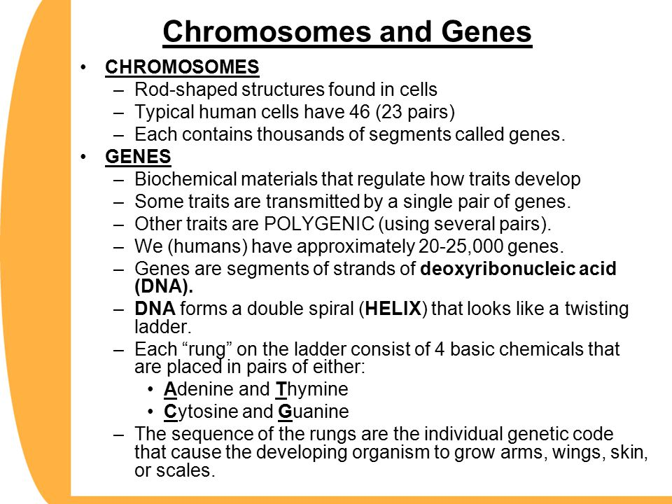 Chromosomes and Genes CHROMOSOMES Rod-shaped structures found in cells