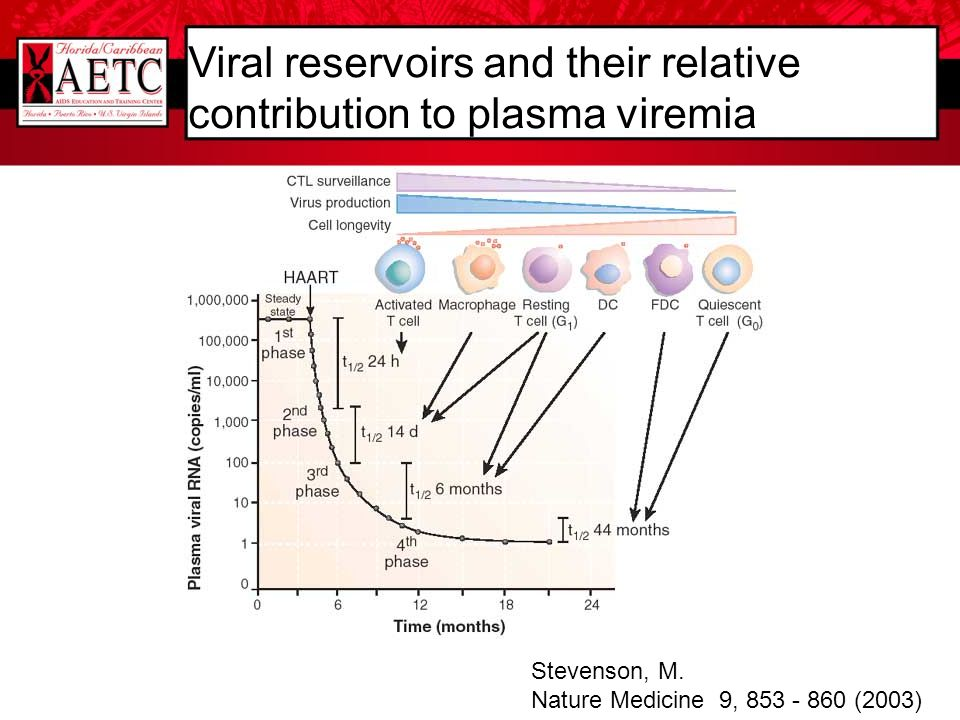 Viral reservoirs and their relative contribution to plasma viremia