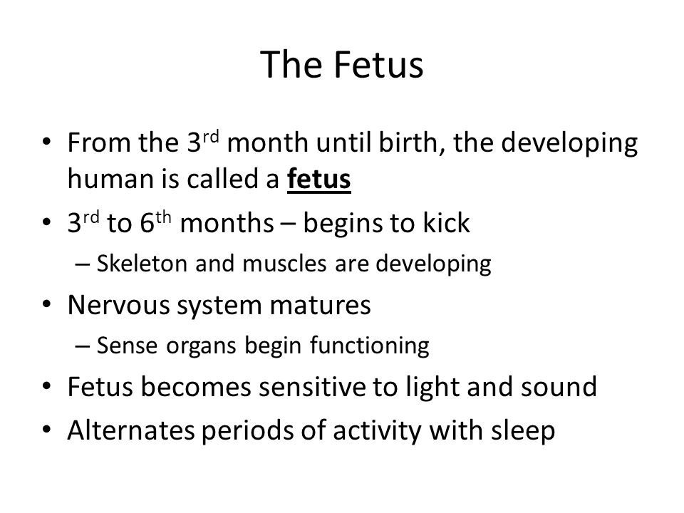 The Fetus From the 3rd month until birth, the developing human is called a fetus. 3rd to 6th months – begins to kick.