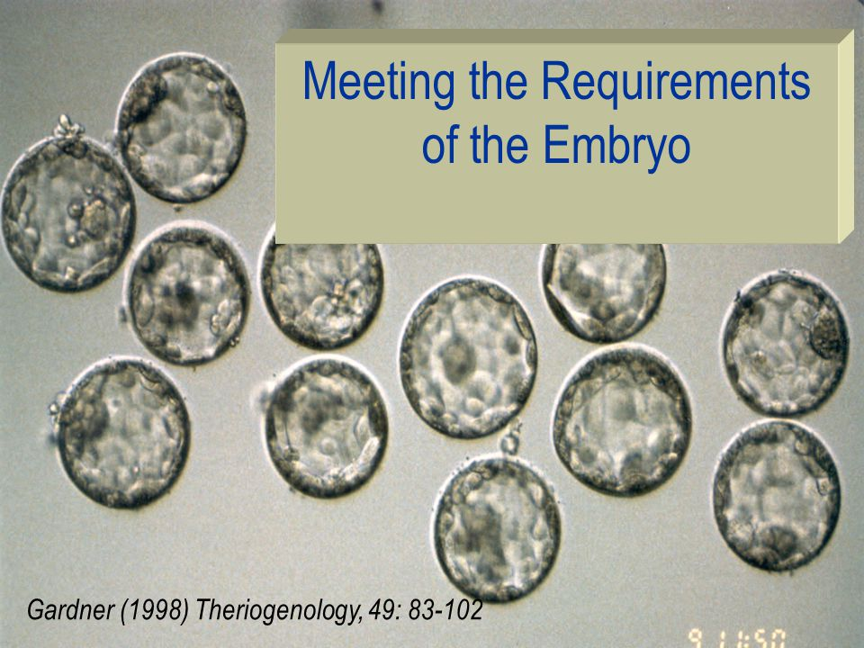 Meeting the Requirements of the Embryo