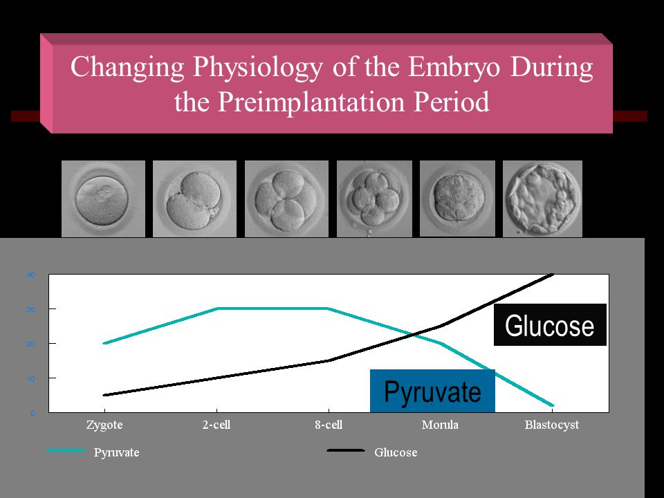 Changing Physiology of the Embryo During the Preimplantation Period
