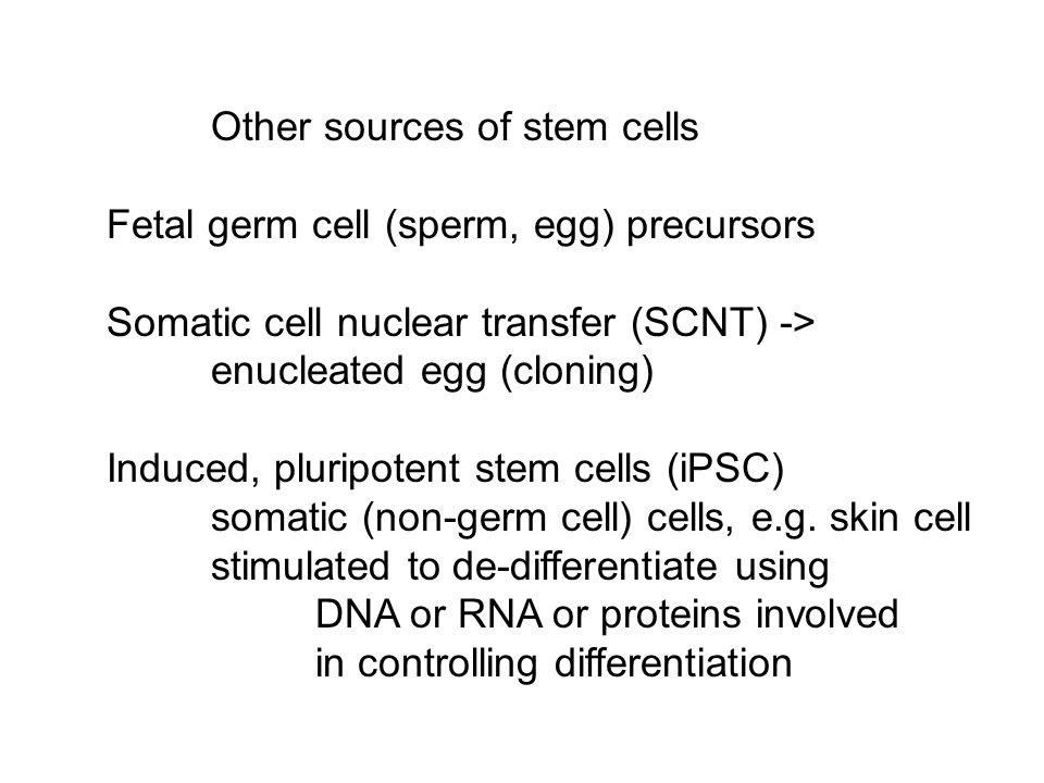 Other sources of stem cells