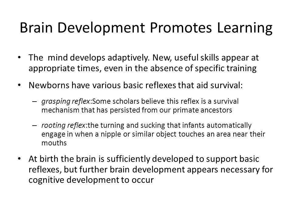 Brain Development Promotes Learning
