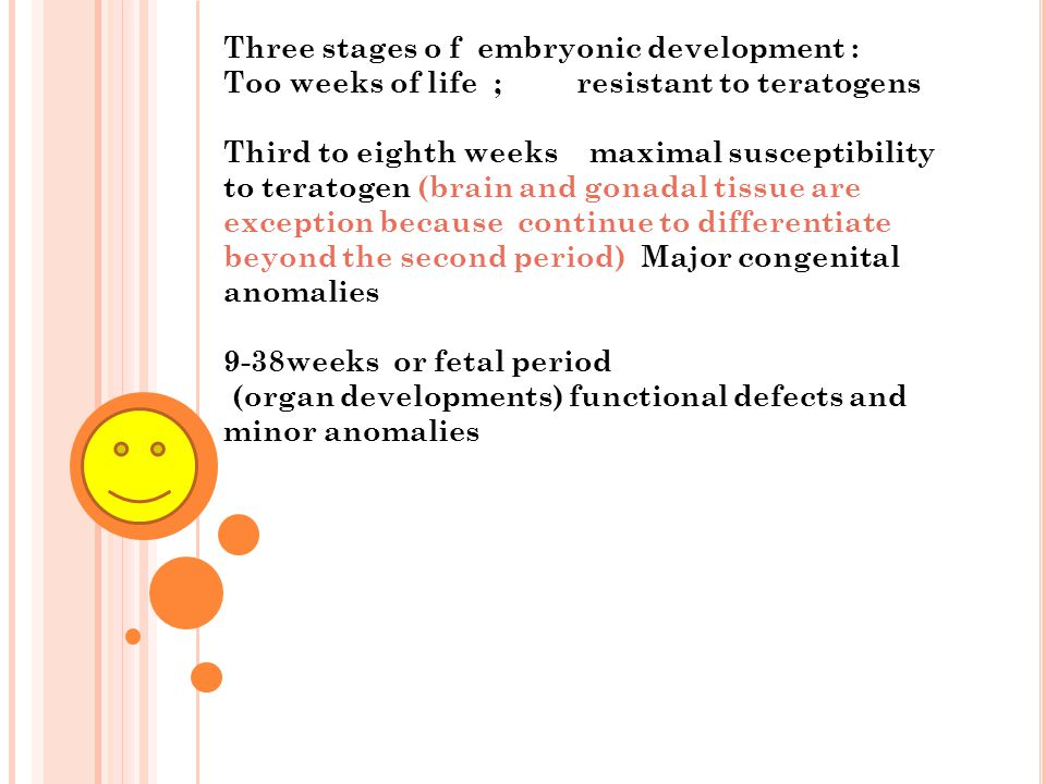 Three stages o f embryonic development :
