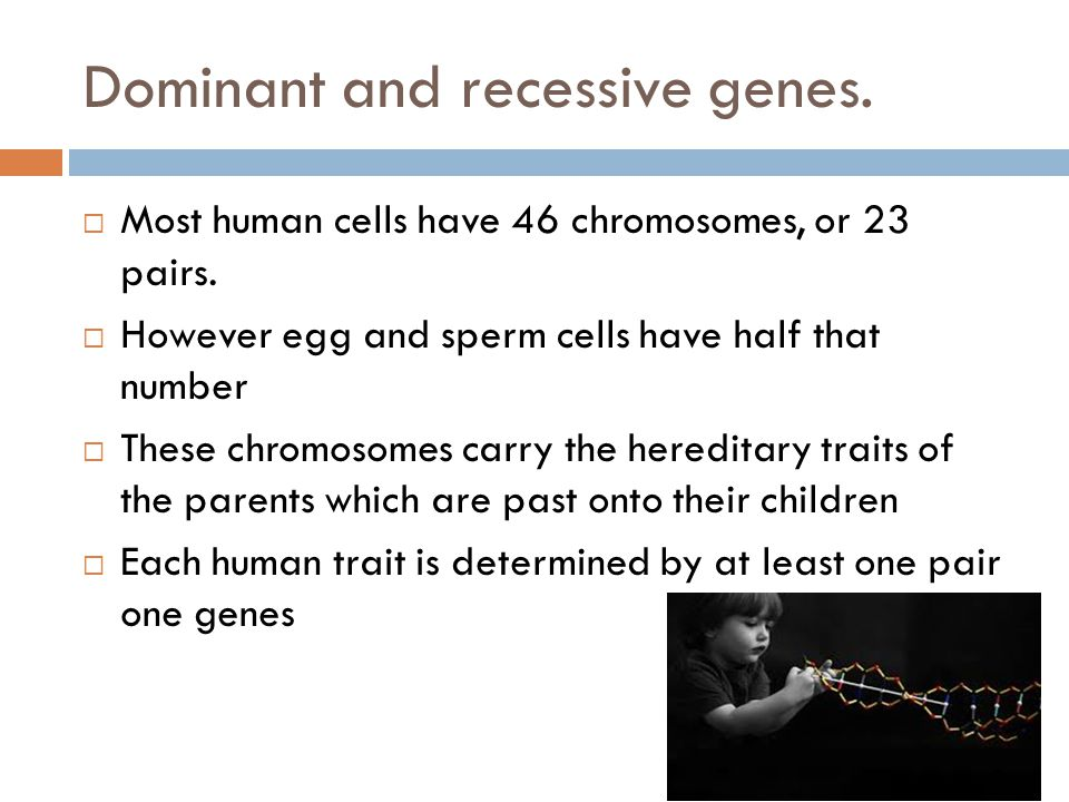 Dominant and recessive genes.