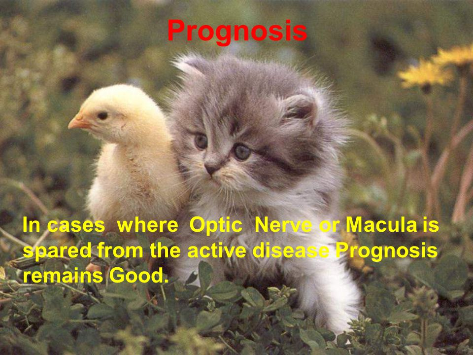 Prognosis In cases where Optic Nerve or Macula is spared from the active disease Prognosis remains Good.