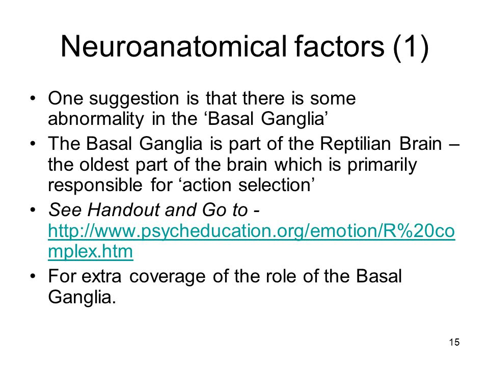 Neuroanatomical factors (1)