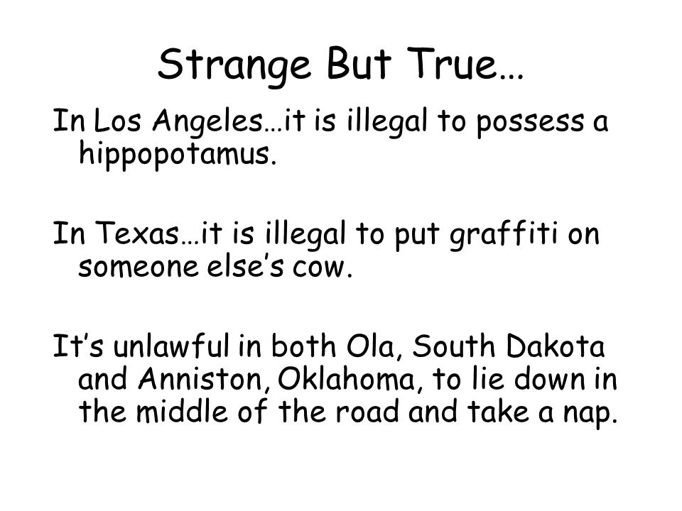 Strange But True… In Los Angeles…it is illegal to possess a hippopotamus. In Texas…it is illegal to put graffiti on someone else's cow.