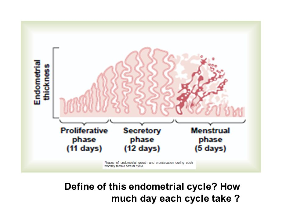 Define of this endometrial cycle How much day each cycle take