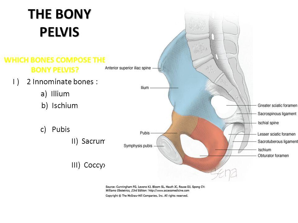 WHICH BONES COMPOSE THE BONY PELVIS