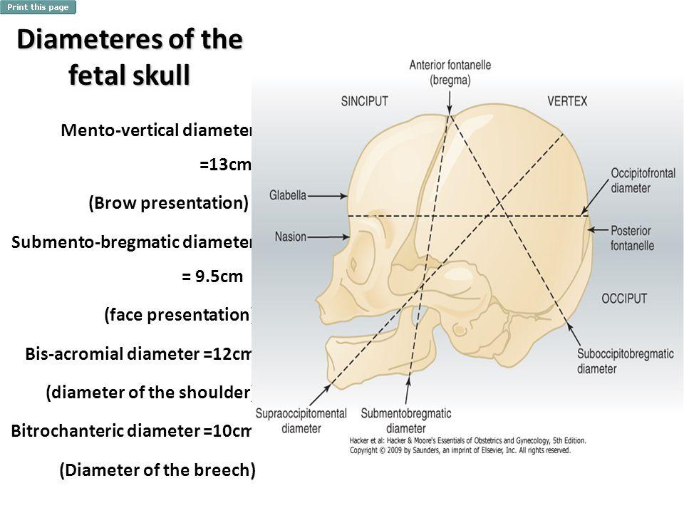 Diameteres of the fetal skull