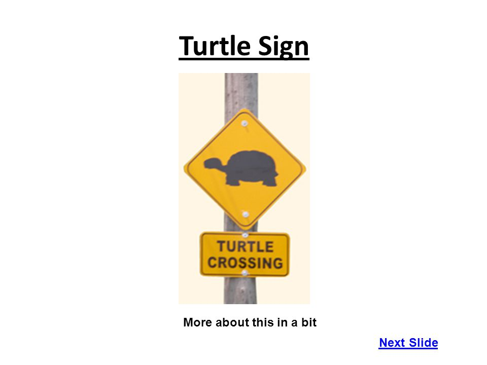 Turtle Sign More about this in a bit Next Slide