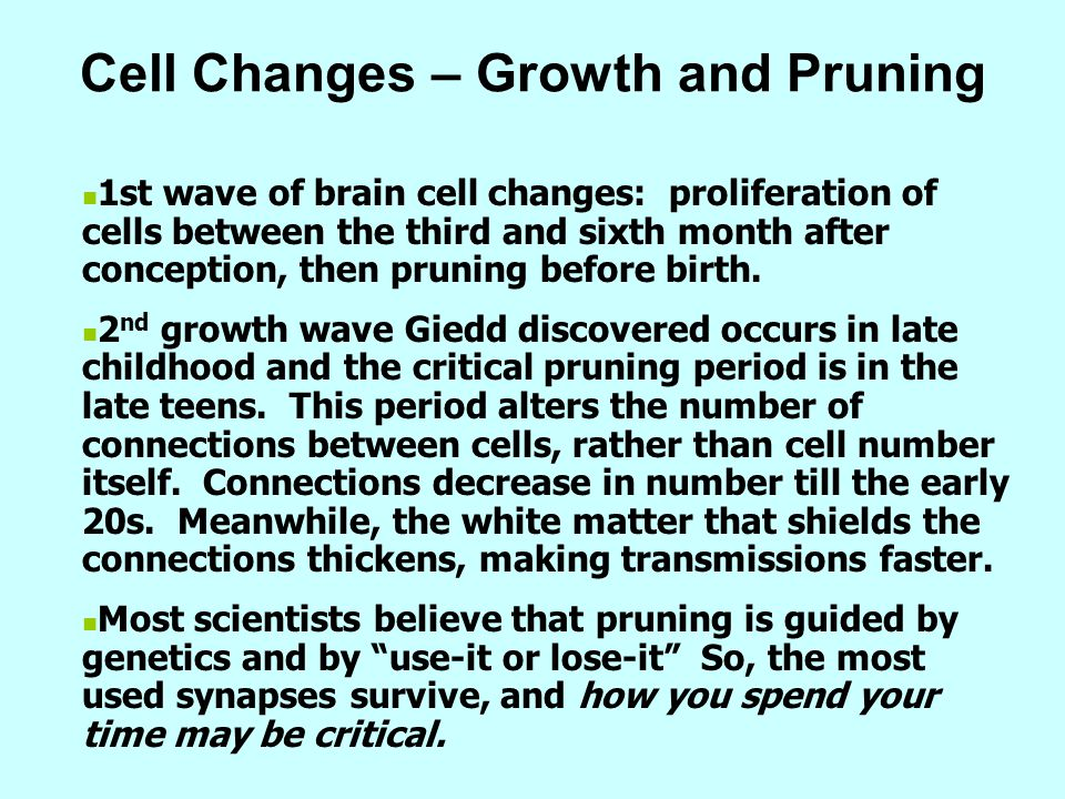 Cell Changes – Growth and Pruning