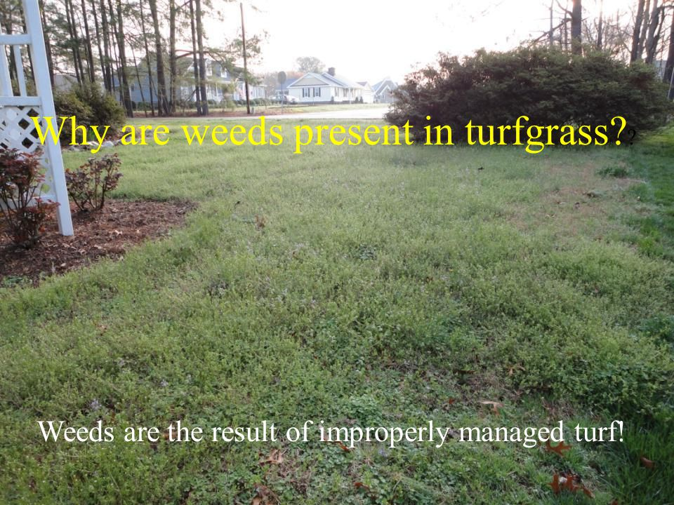 Weeds are the result of improperly managed turf!