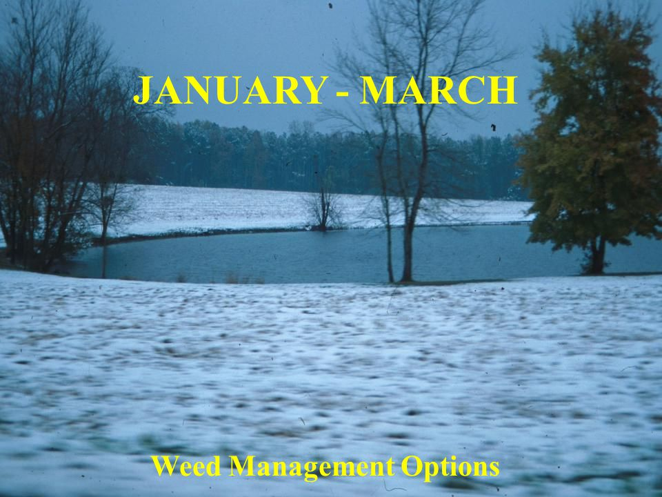 JANUARY - MARCH Weed Management Options