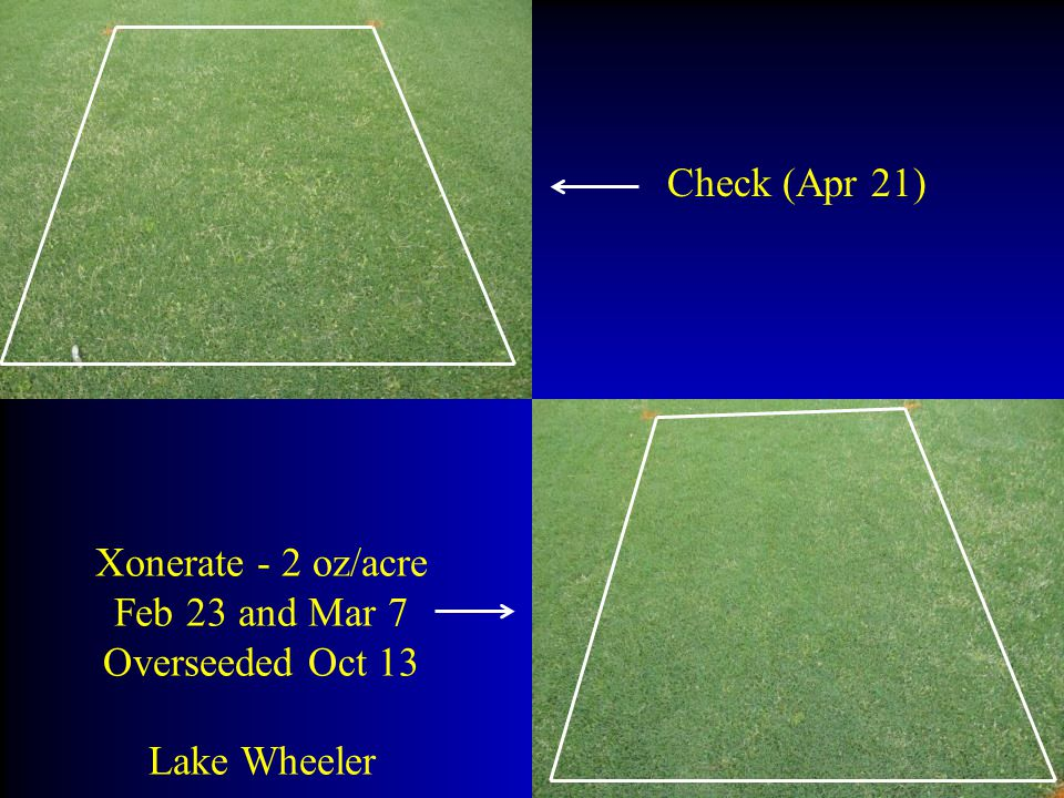 Check (Apr 21) Xonerate - 2 oz/acre Feb 23 and Mar 7 Overseeded Oct 13 Lake Wheeler