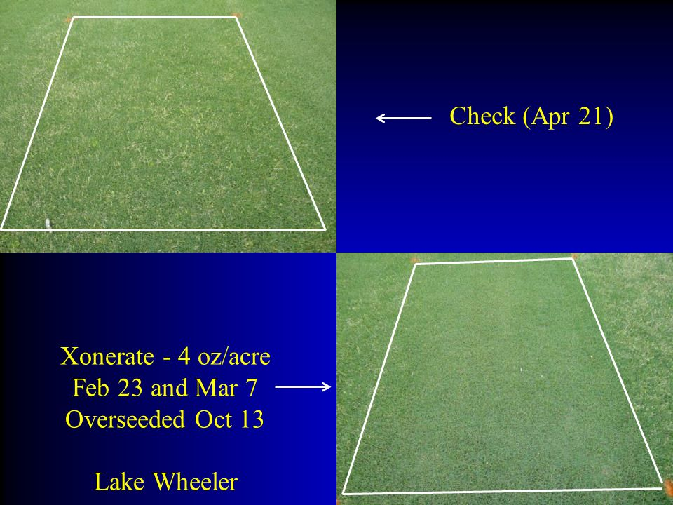 Check (Apr 21) Xonerate - 4 oz/acre Feb 23 and Mar 7 Overseeded Oct 13 Lake Wheeler