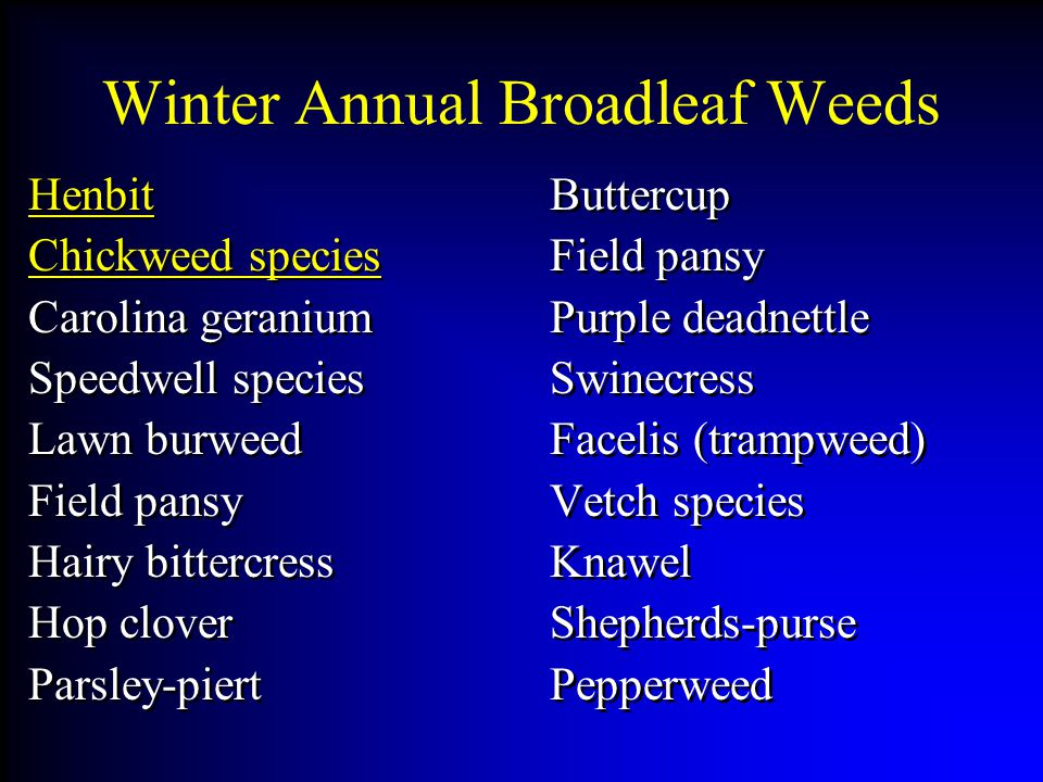 Winter Annual Broadleaf Weeds