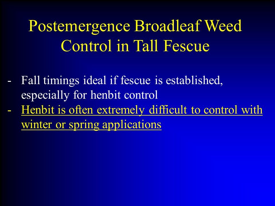 Postemergence Broadleaf Weed Control in Tall Fescue