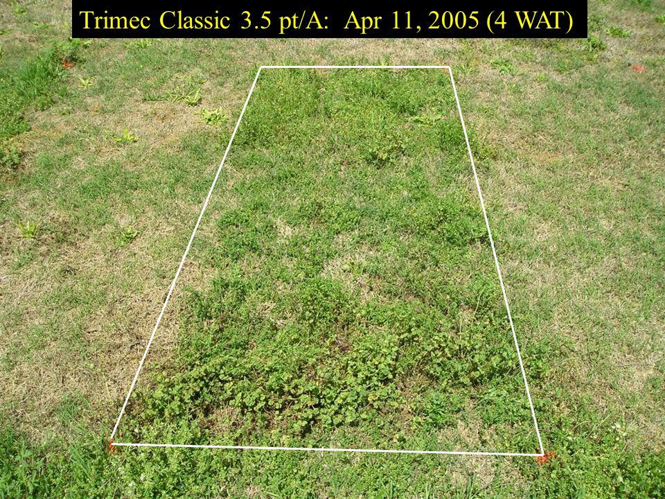 Trimec Classic 3.5 pt/A: Apr 11, 2005 (4 WAT)