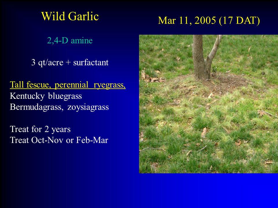 Wild Garlic Mar 11, 2005 (17 DAT) 2,4-D amine 3 qt/acre + surfactant