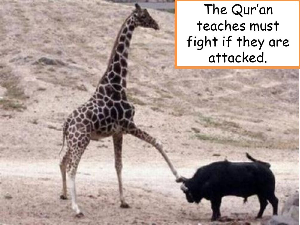 The Qur'an teaches must fight if they are attacked.