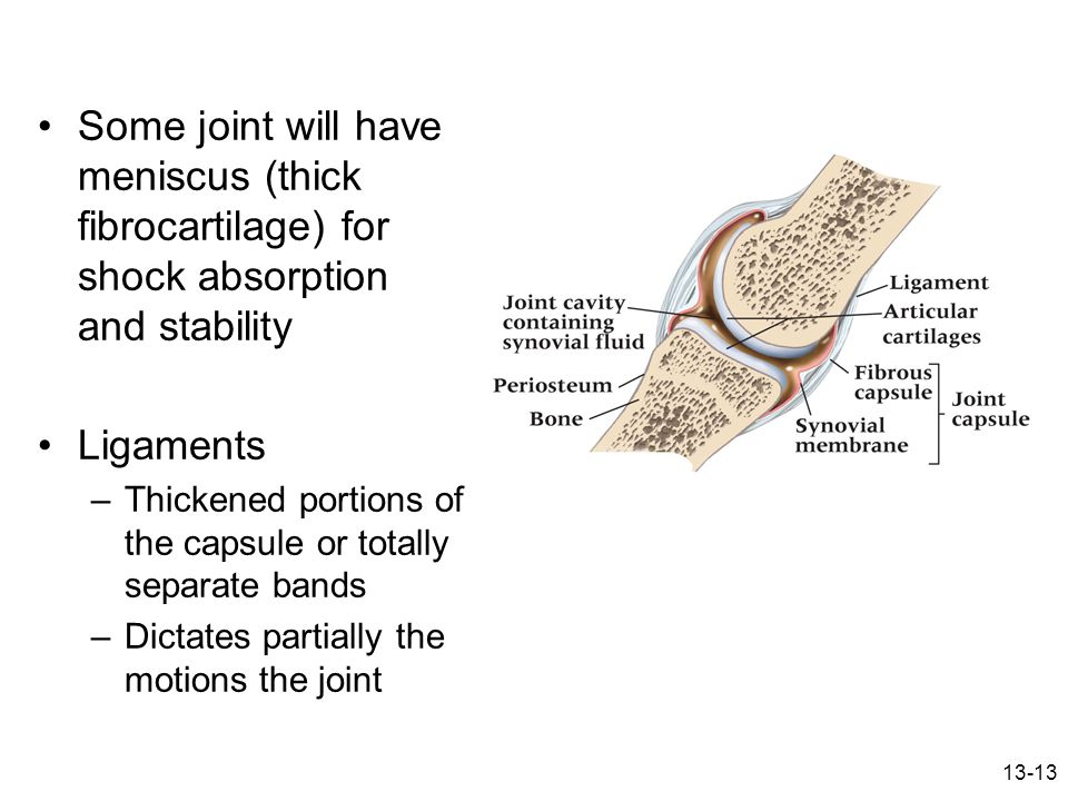 Some joint will have meniscus (thick fibrocartilage) for shock absorption and stability