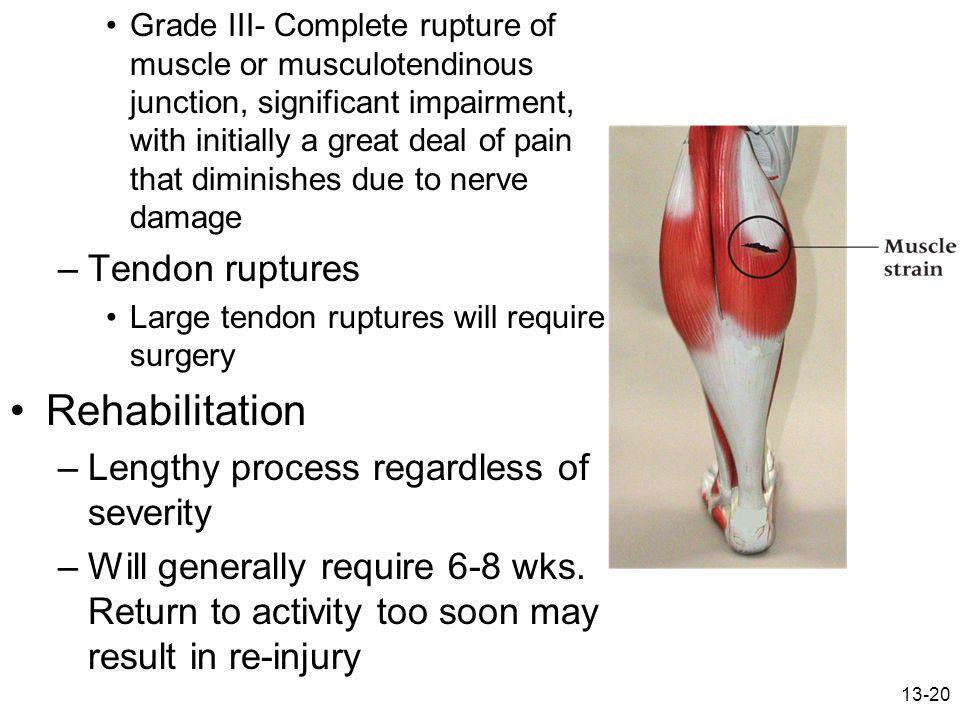 Rehabilitation Tendon ruptures Lengthy process regardless of severity