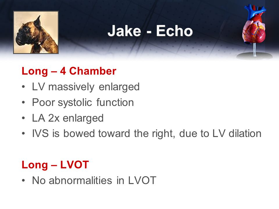 Jake - Echo Long – 4 Chamber LV massively enlarged