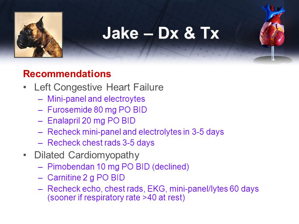 Jake – Dx & Tx Recommendations Left Congestive Heart Failure