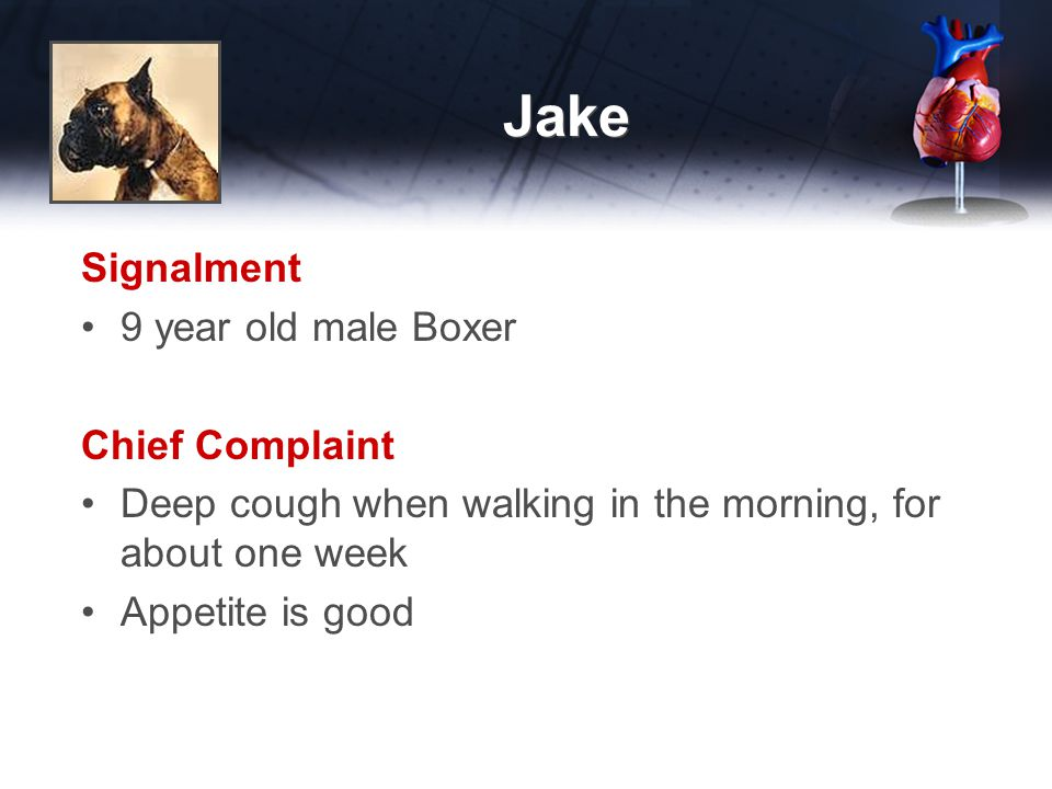 Jake Signalment 9 year old male Boxer Chief Complaint